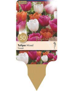 Tulipa Triumph Mixed Colours x50