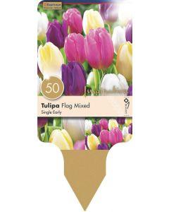 Tulipa Single Early Flag Mixed Colours x50