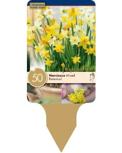 Narcissus Botanical Mixed Colours x50