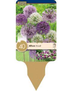 Allium Largeflowering Mixed Colours x40