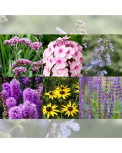 Blooms, Bees & Butterflies pakket