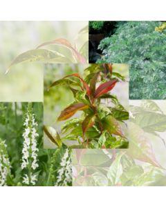 60 x 60 cm plantenbak