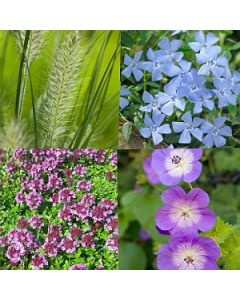 Onderhoudsarme tuin pakket