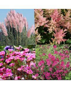 Roze bloemen pakket