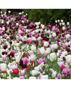 Landscape Tray 'Blueberry Ripple Tulips'