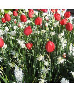 Red & White Spring Garden