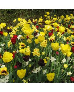 Landscape Tray 'Bright and Bold Blooms'